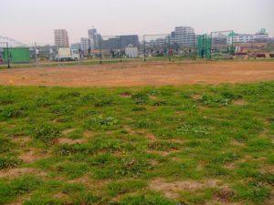 多摩川河川敷(小向仲野町地区)